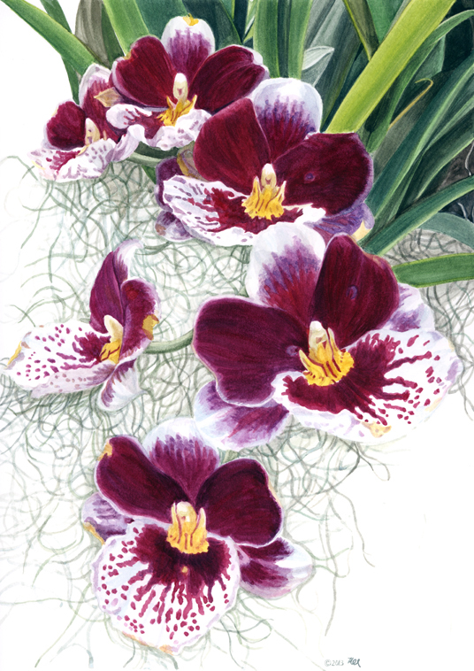"""Orchid, wc on paper, 12""""x 10"""""""