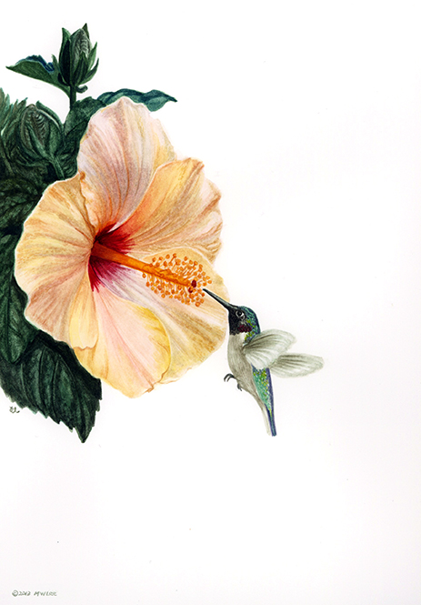 "Hummingbird 1, watercolor on paper, 10""x8"""