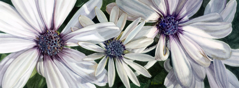 """Daisies, watercolor on paper, 7""""x19"""""""