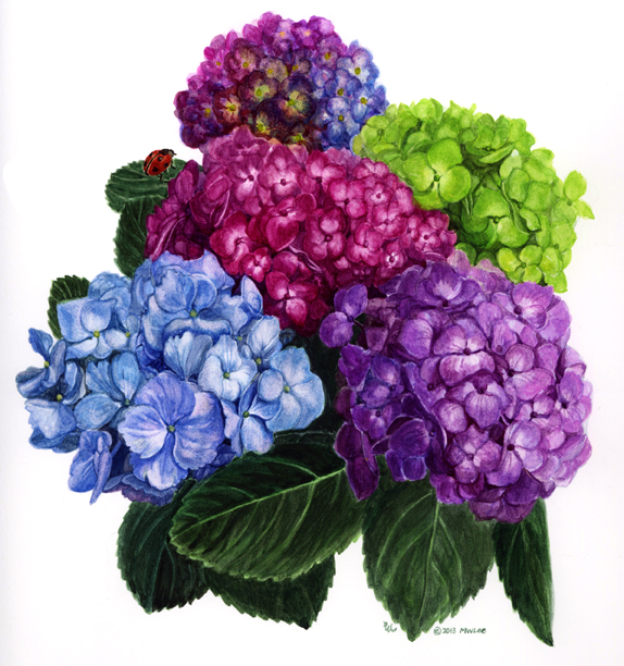 """hydrangea, water color on paper, 10""""x10"""" (SOLD)"""