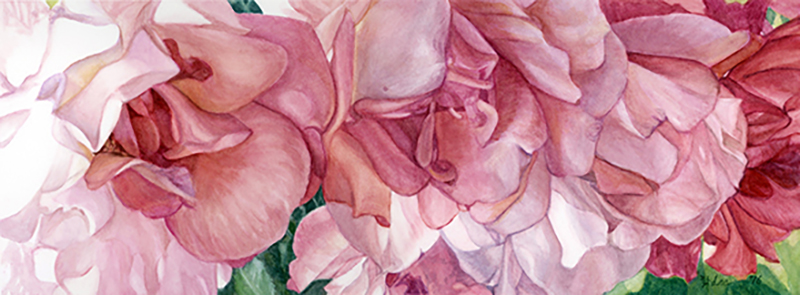 """Wildrose, watercolor on paper, 7""""x19"""""""