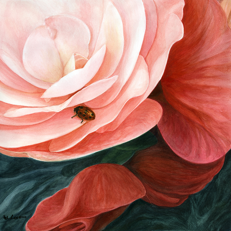 """ladybug on begonia, watercolor on paper, 16""""x16"""" (SOLD)"""